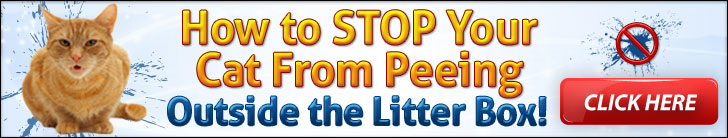 Stop Cat Peeing Outside The Litter Box