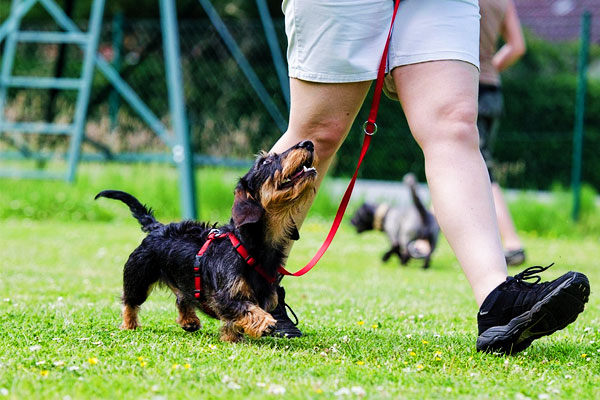 house-training-a-puppy
