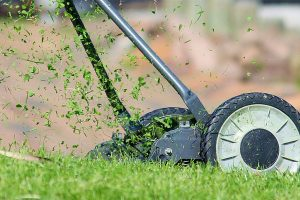 What Are Some Of The Best Lawn Mowers To Buy?