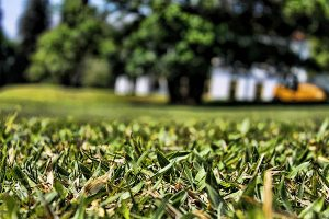 How and When to Seed Lawn Grass?