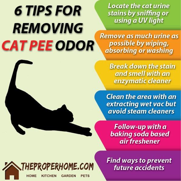 tips to remove cat pee odor