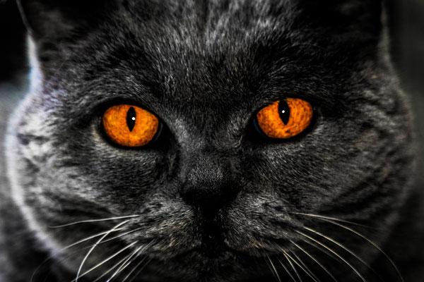 cat-communication-behavior