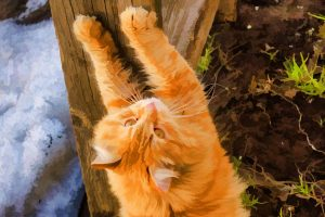 How To Discipline Your Pet Cat In A Positive Way?