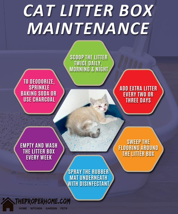 cat litter box cleaning and maintenance