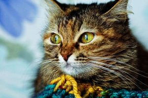 Answers To Common Questions About Pet Cats