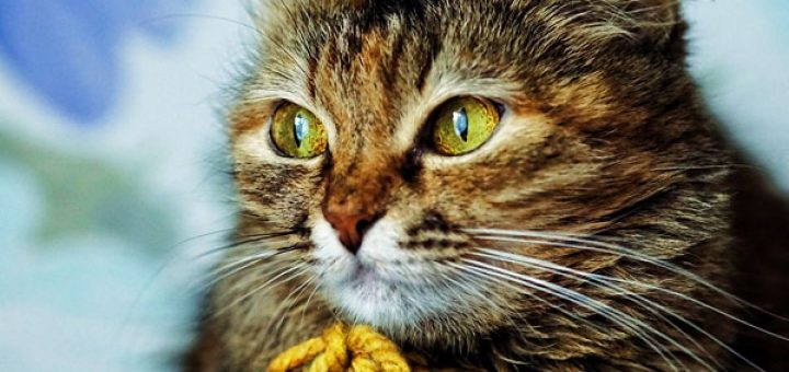 cats-frequently-asked-questions