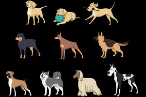 dog breeds types