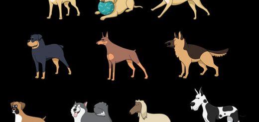dog breeds types