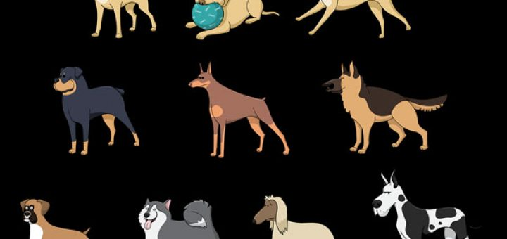 A Short Guide To Various Dog Breeds