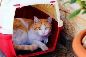 Types Of Litter Boxes For Your Kitty