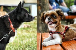What Type Of Harness Or Collar Is Best For Your Pet Dog