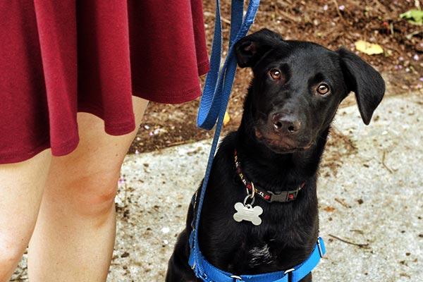 dog-collar-with-name-tag