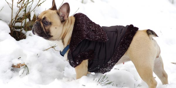 dog-quilted-jacket
