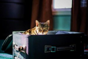 Choosing the Right Airline Approved Pet Carrier for Travel