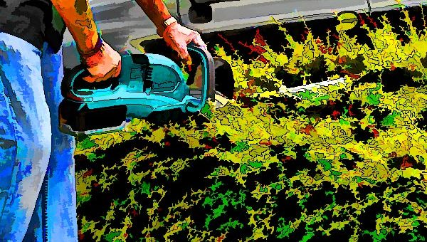 Best-cordless-hedge-trimmers
